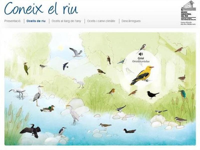 Resultat d'imatges de coneix el riu ocells
